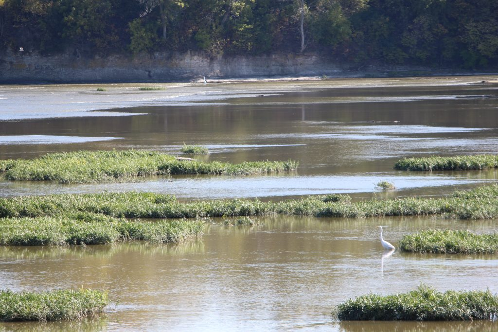 Northern Ohio. October 2019. Great Egret. Jill Kemerer