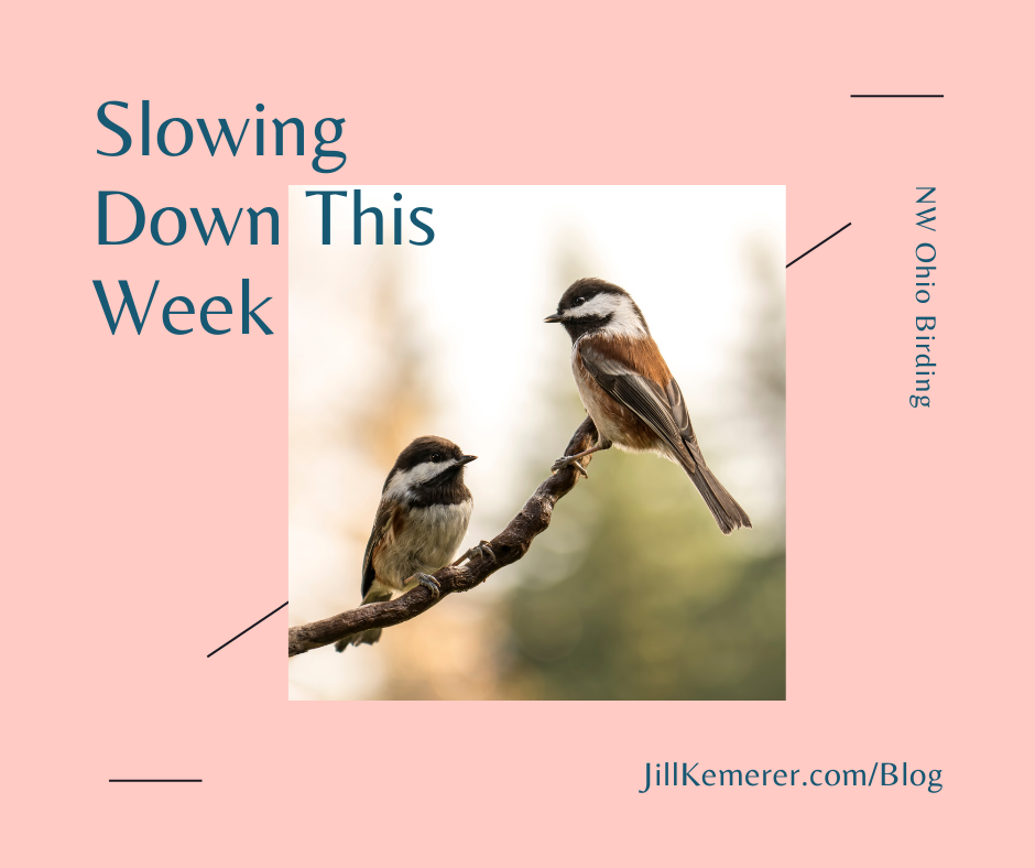 Slowing Down This Week By Jill Kemerer